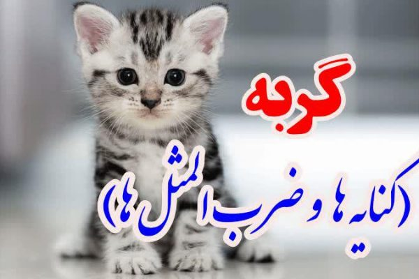 گربه(کنایه ها و ضرب المثل ها)